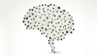 estudo-comprova-que-leitura-modifica-a-estrutura-do-cerebro